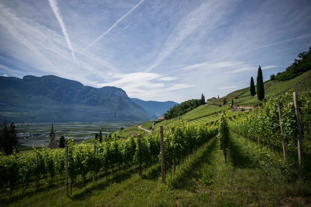 Flights to Italy Vineyards